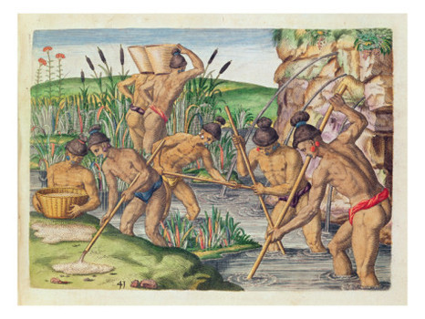 jacques le moyne how the indians collect gold from the streams from brevis narratio